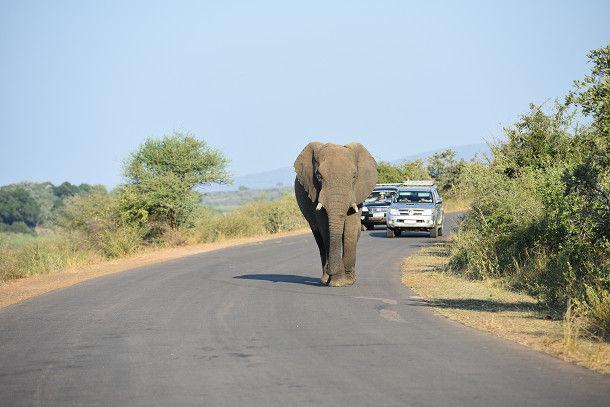 9象 (3)