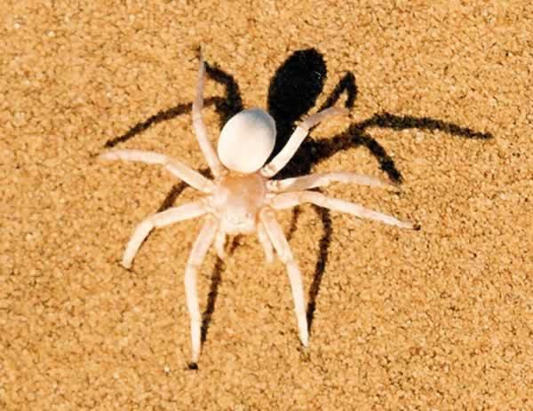 スワコプムンド 砂漠の生物3