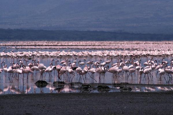 ボゴリア湖2