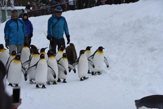 2日目ペンギン (8)s