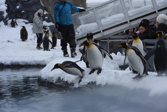 2日目ペンギン (12)s