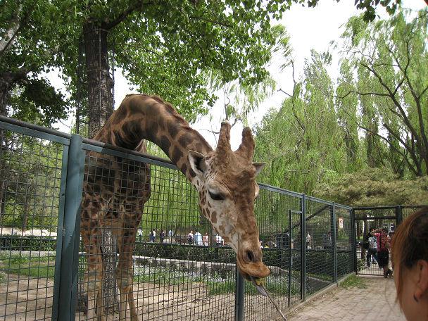 26 北京動物園 (23)