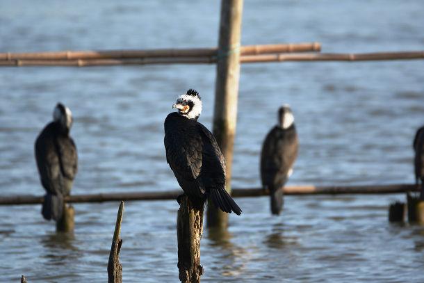 9正体不明の黒い鳥 (13)