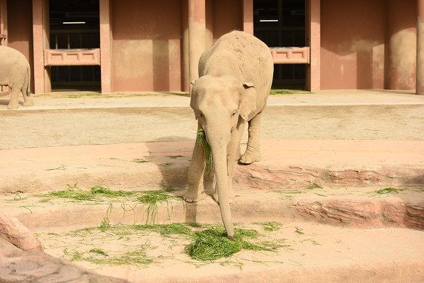 象 (2)