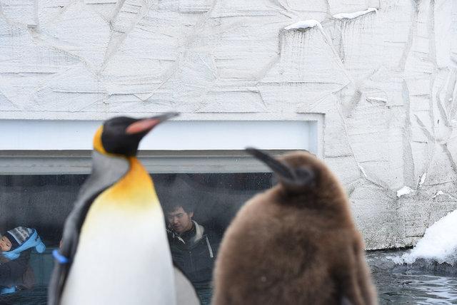 2日目ペンギン (27)s