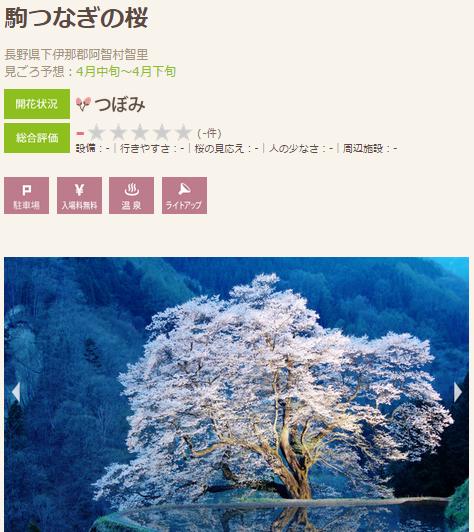 高遠 桜6 飯田 駒のつなぎ桜