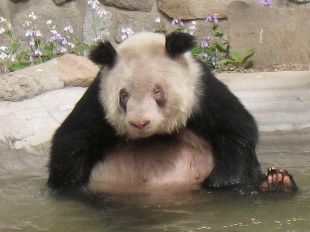 26 北京動物園 (7)