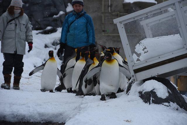 2日目ペンギン (11)s