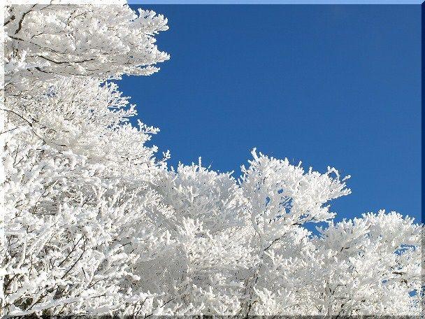 御在所 樹氷7