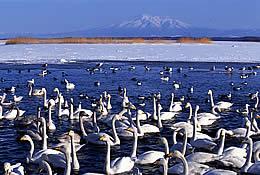 2 北浜白鳥公園