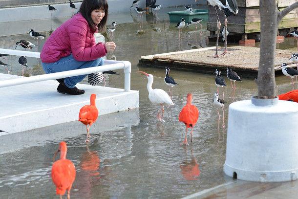 水辺赤い鳥 (1)