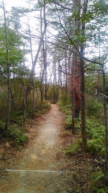 8 森林公園 (3)