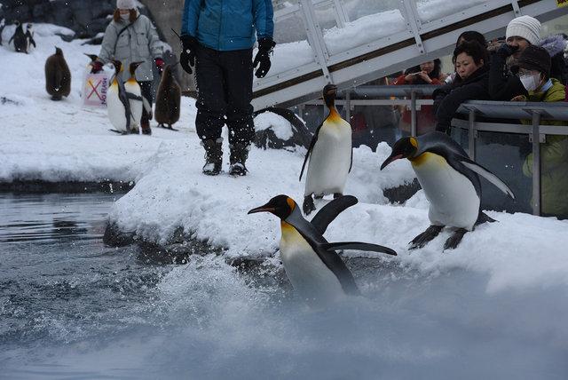 2日目ペンギン (16)s
