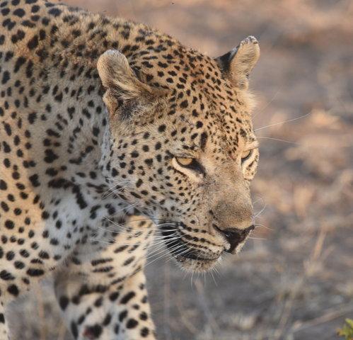 1豹 (17)