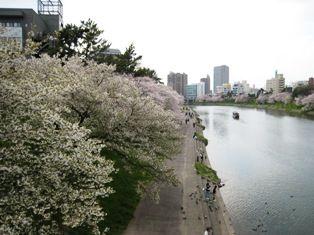 2010年 岡崎桜 006