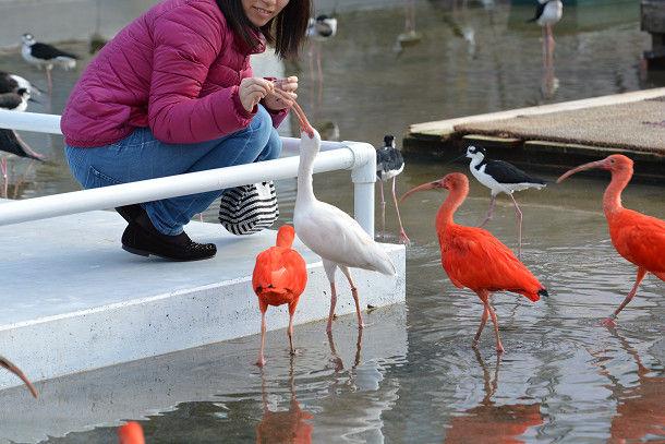 水辺赤い鳥 (2)