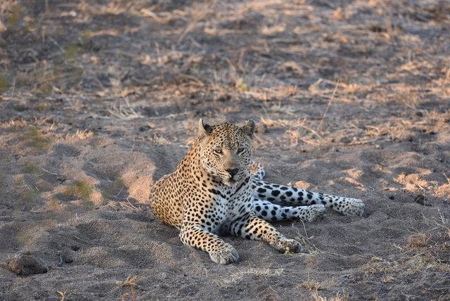 1豹 (22)