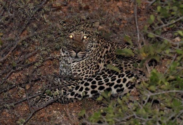 豹 (9)