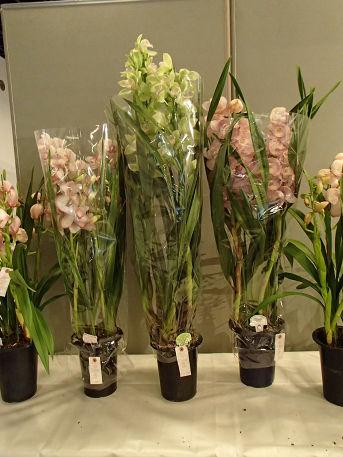 17 (12) 花の販売