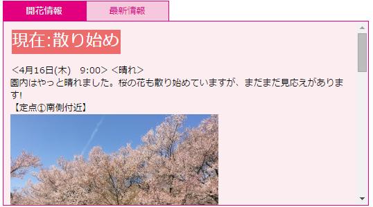 桜3 高遠桜