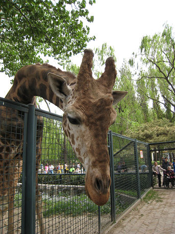 26 北京動物園 (26)
