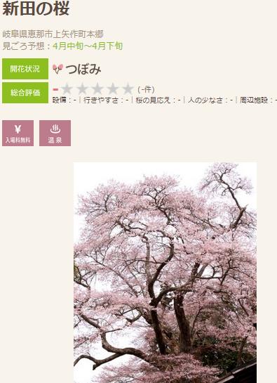 高遠 桜4 恵那
