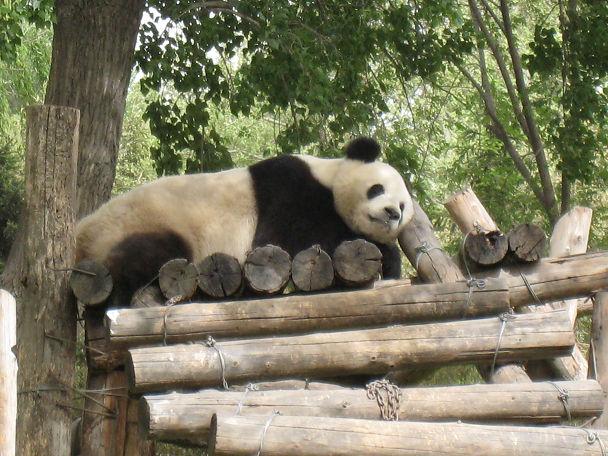 26 北京動物園 (12)