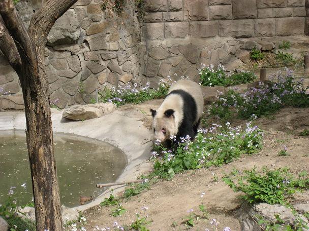 26 北京動物園 (10)