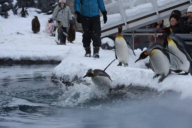 2日目ペンギン (15)s