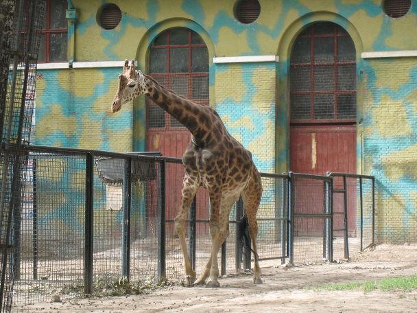 26 北京動物園 (21)