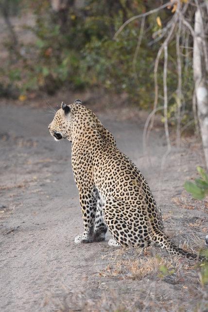 1豹 (24)