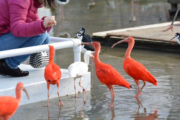 水辺赤い鳥 (3)