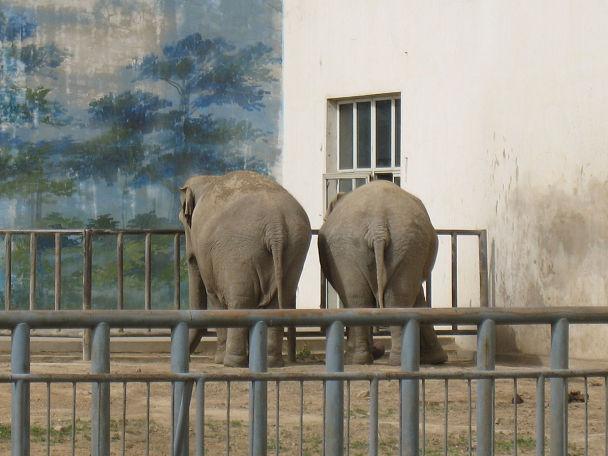 26 北京動物園 (17)