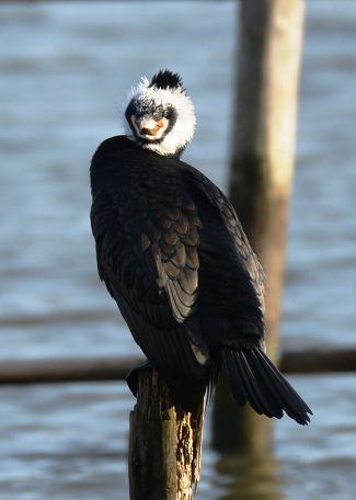9正体不明の黒い鳥 (14)