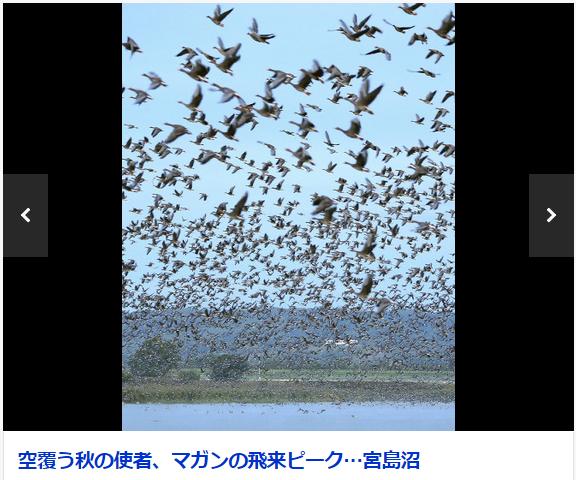宮島沼 渡り鳥