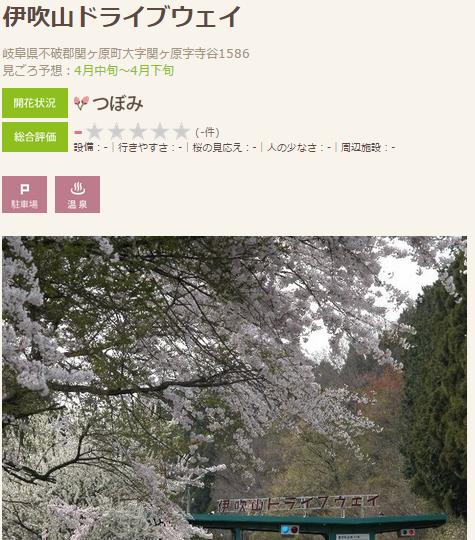 高遠 桜8 伊吹山