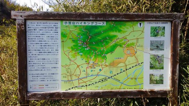 6 探鳥会小笠山3月4日 (4)