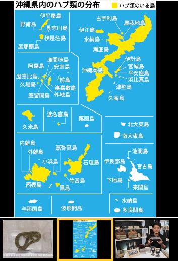 沖縄のハブ事情