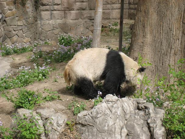 26 北京動物園 (8)