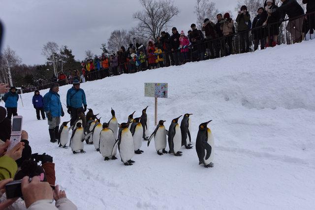 2日目ペンギン (1)s