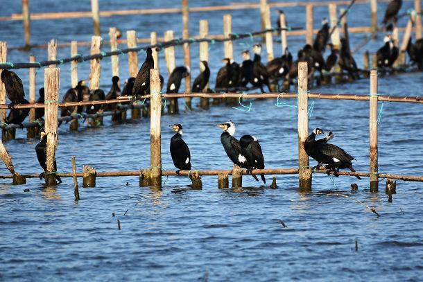 9正体不明の黒い鳥 (2)