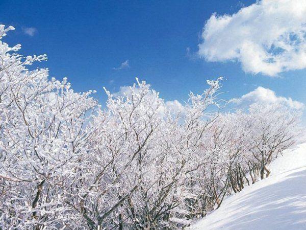 御在所 樹氷1
