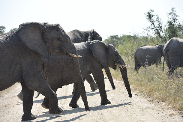 9象 (1)
