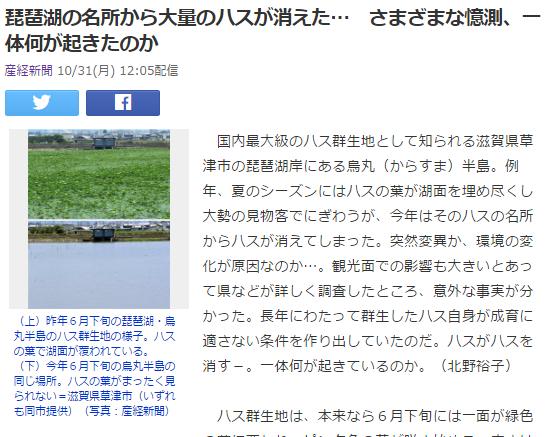 今日の16 琵琶湖の巨大蓮