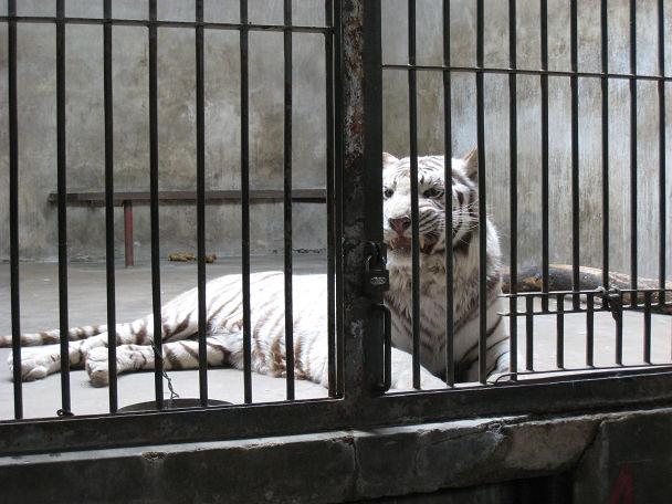 26 北京動物園 (14)