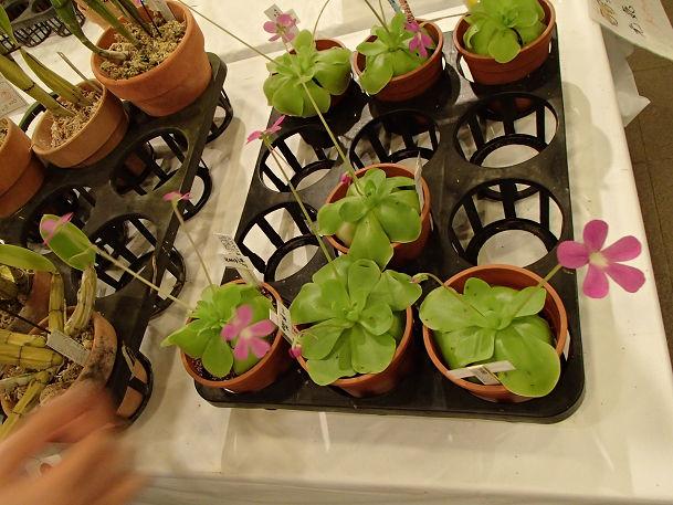 17 (14) 花の販売