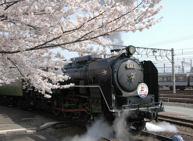 京都の桜 2008 649s