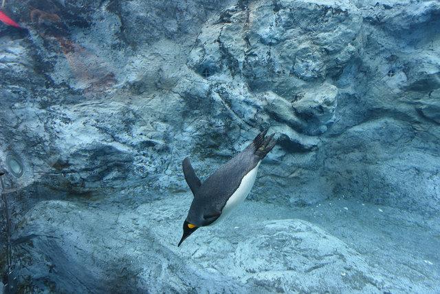 2日目ペンギン (5)s