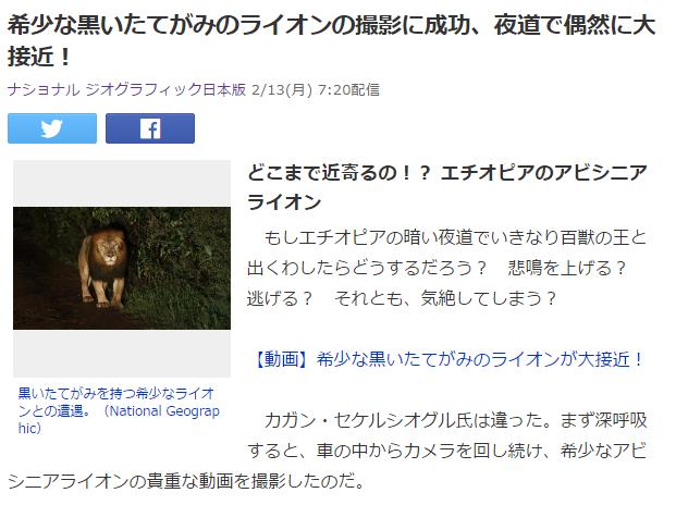 動物ネタ1 ライオン