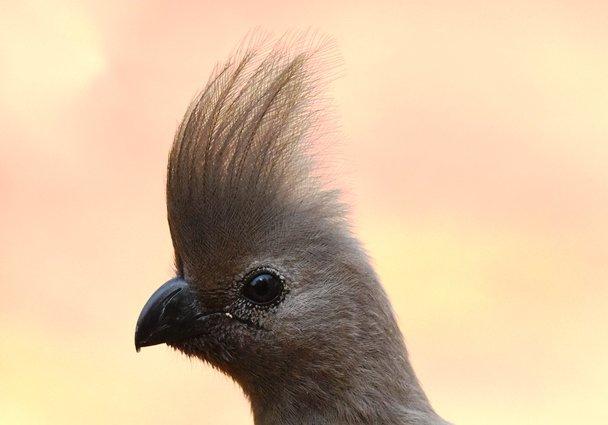 Grey bird (12)